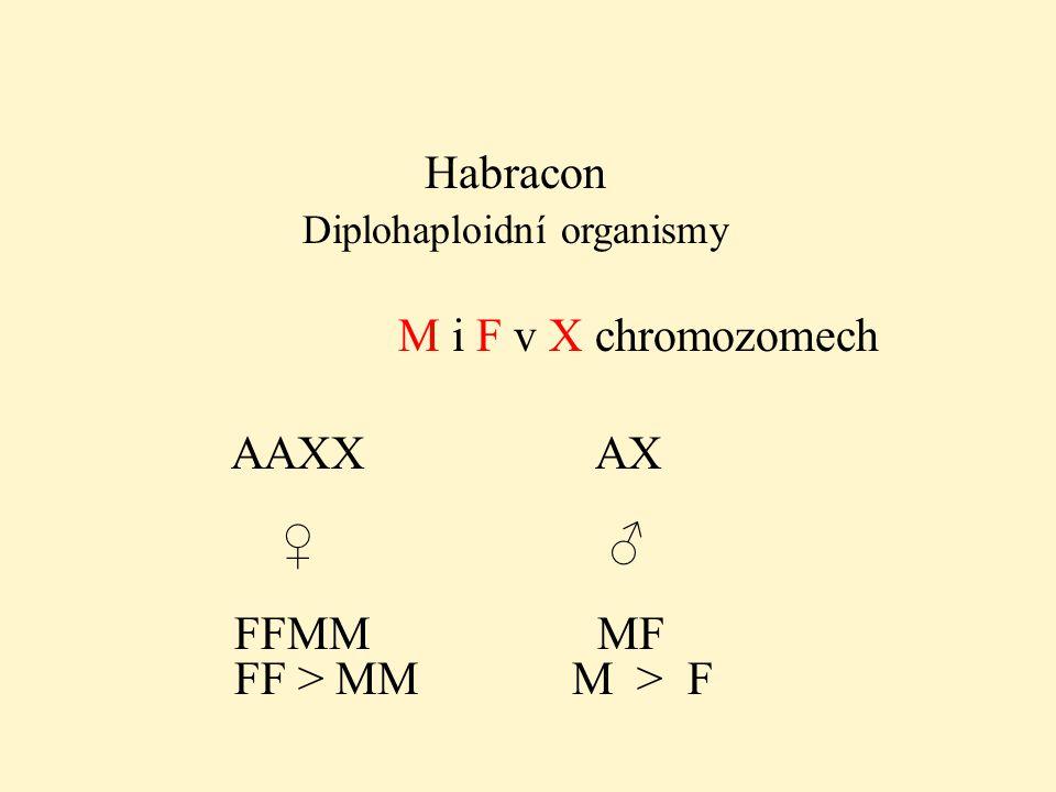 Habracon Diplohaploidní organismy M i F v X chromozomech AAXX AX ♀ ♂ FFMM MF FF > MM M > F