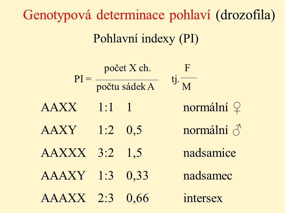 Genotypová determinace pohlaví (drozofila) Pohlavní indexy (PI) počet X ch. F počtu sádek AM PI = tj. AAXX1:11normální ♀ AAXY1:20,5normální ♂ AAXXX3:2
