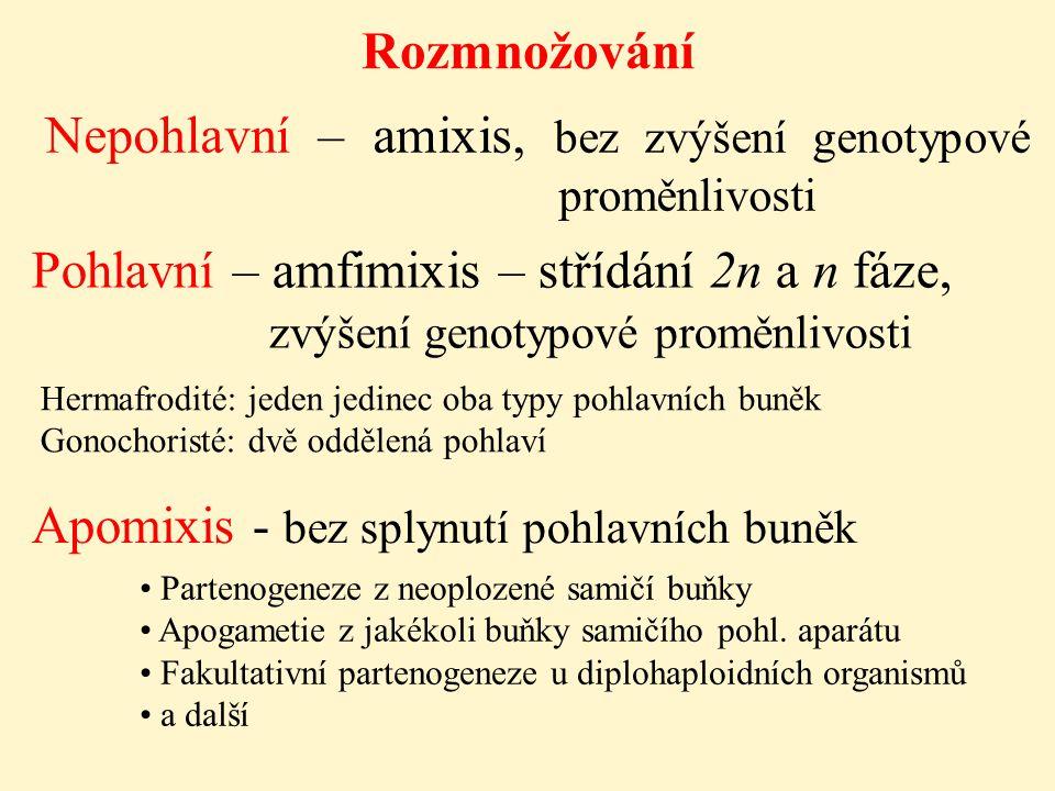 Rozmnožování Nepohlavní – amixis, bez zvýšení genotypové proměnlivosti Pohlavní – amfimixis – střídání 2n a n fáze, zvýšení genotypové proměnlivosti A