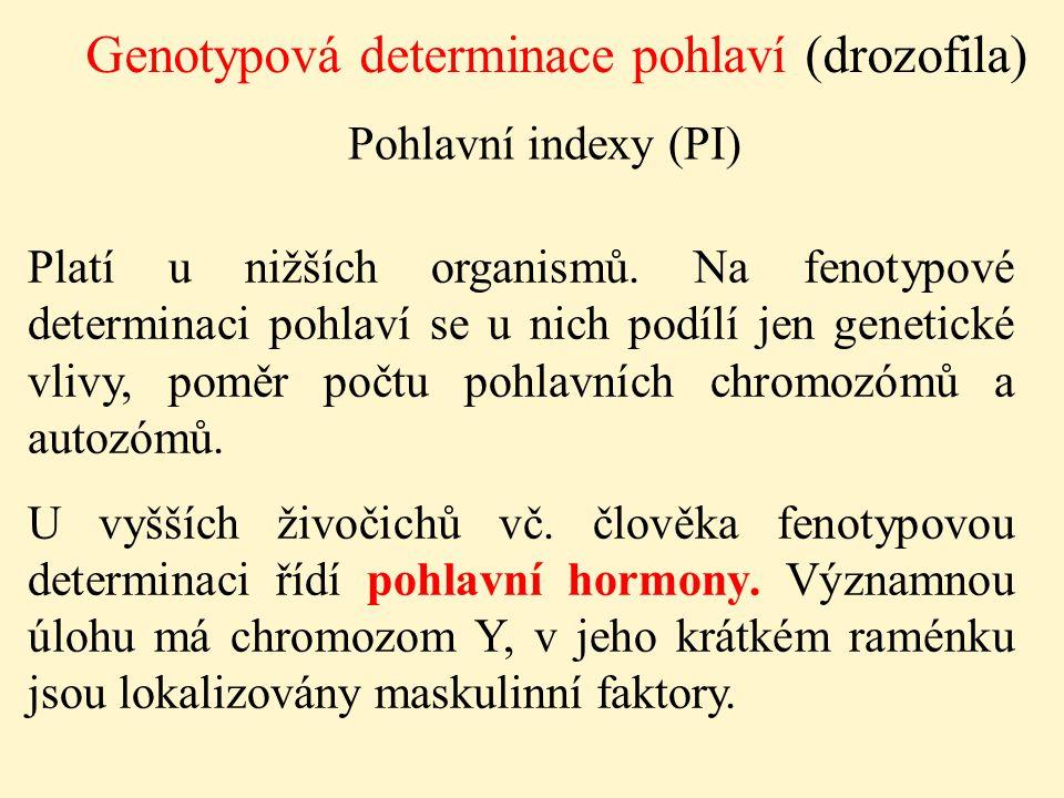 Genotypová determinace pohlaví (drozofila) Pohlavní indexy (PI) Platí u nižších organismů. Na fenotypové determinaci pohlaví se u nich podílí jen gene