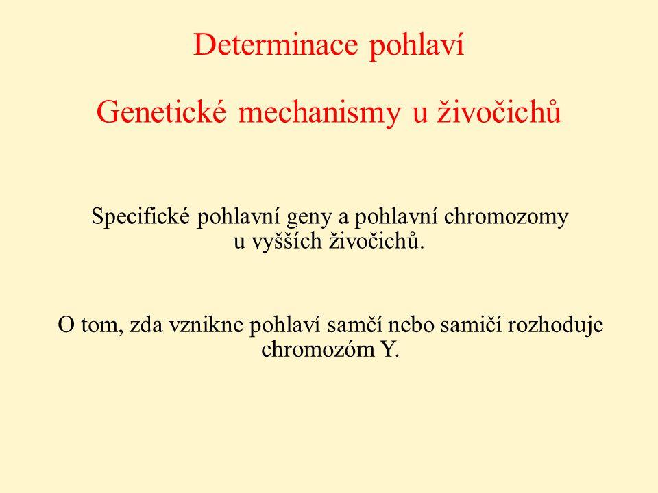Determinace pohlaví Genetické mechanismy u živočichů Specifické pohlavní geny a pohlavní chromozomy u vyšších živočichů. O tom, zda vznikne pohlaví sa