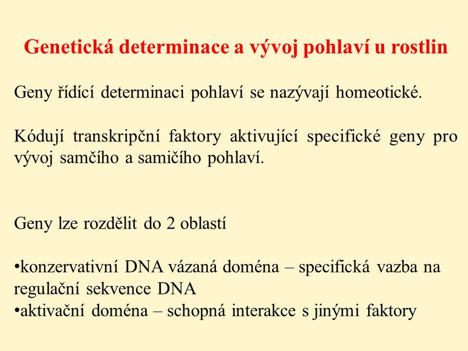 Genetická determinace a vývoj pohlaví u rostlin Geny řídící determinaci pohlaví se nazývají homeotické. Kódují transkripční faktory aktivující specifi
