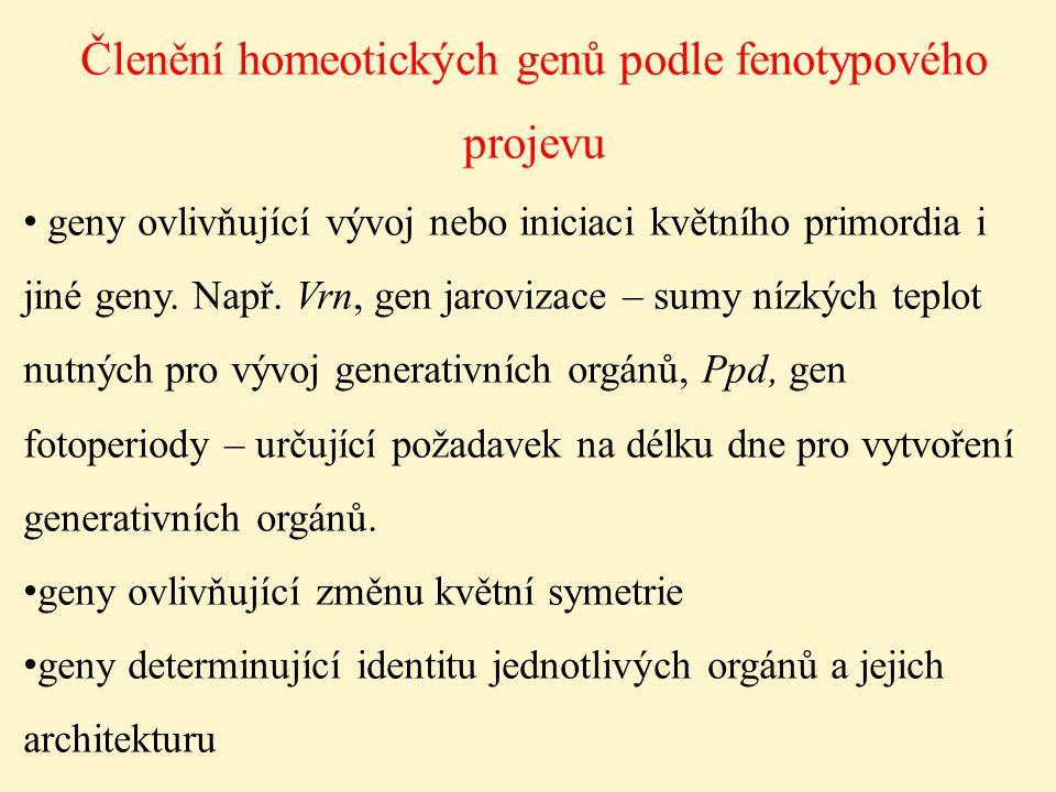 Členění homeotických genů podle fenotypového projevu geny ovlivňující vývoj nebo iniciaci květního primordia i jiné geny. Např. Vrn, gen jarovizace –