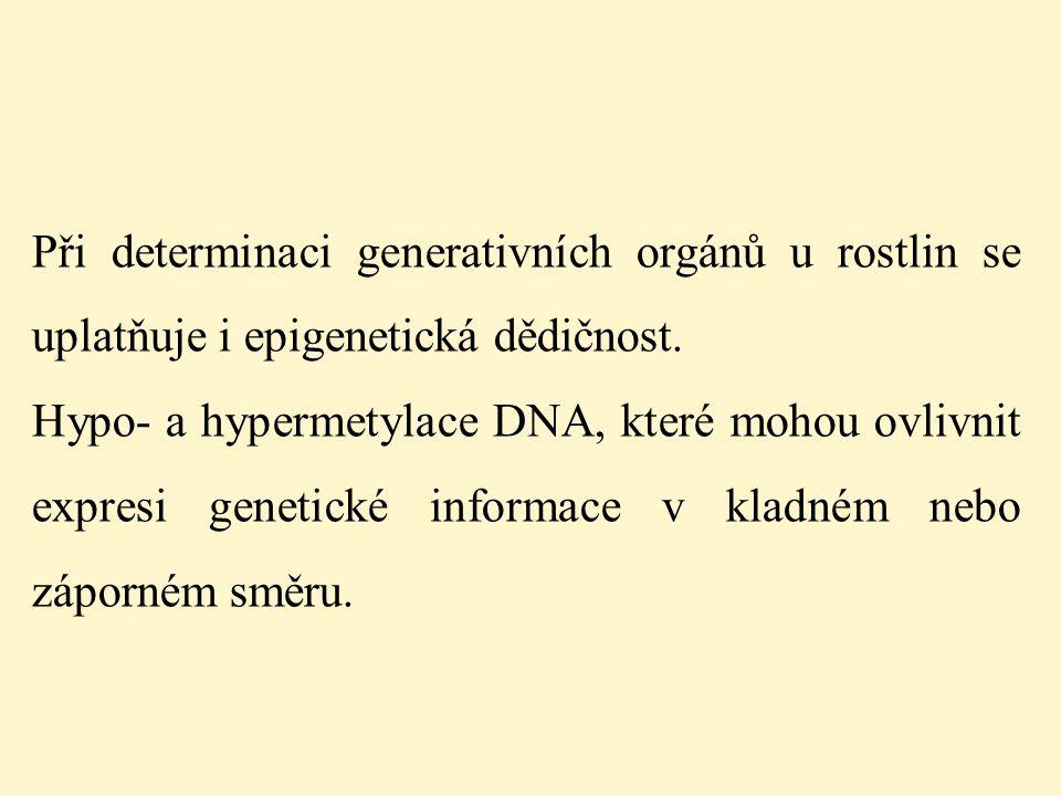 Při determinaci generativních orgánů u rostlin se uplatňuje i epigenetická dědičnost. Hypo- a hypermetylace DNA, které mohou ovlivnit expresi genetick