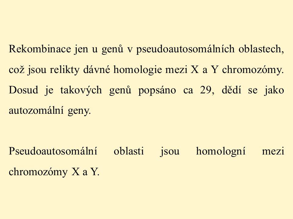 Rekombinace jen u genů v pseudoautosomálních oblastech, což jsou relikty dávné homologie mezi X a Y chromozómy. Dosud je takových genů popsáno ca 29,