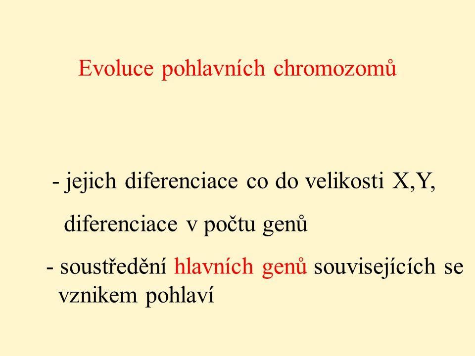 Evoluce pohlavních chromozomů - jejich diferenciace co do velikosti X,Y, diferenciace v počtu genů - soustředění hlavních genů souvisejících se vznike