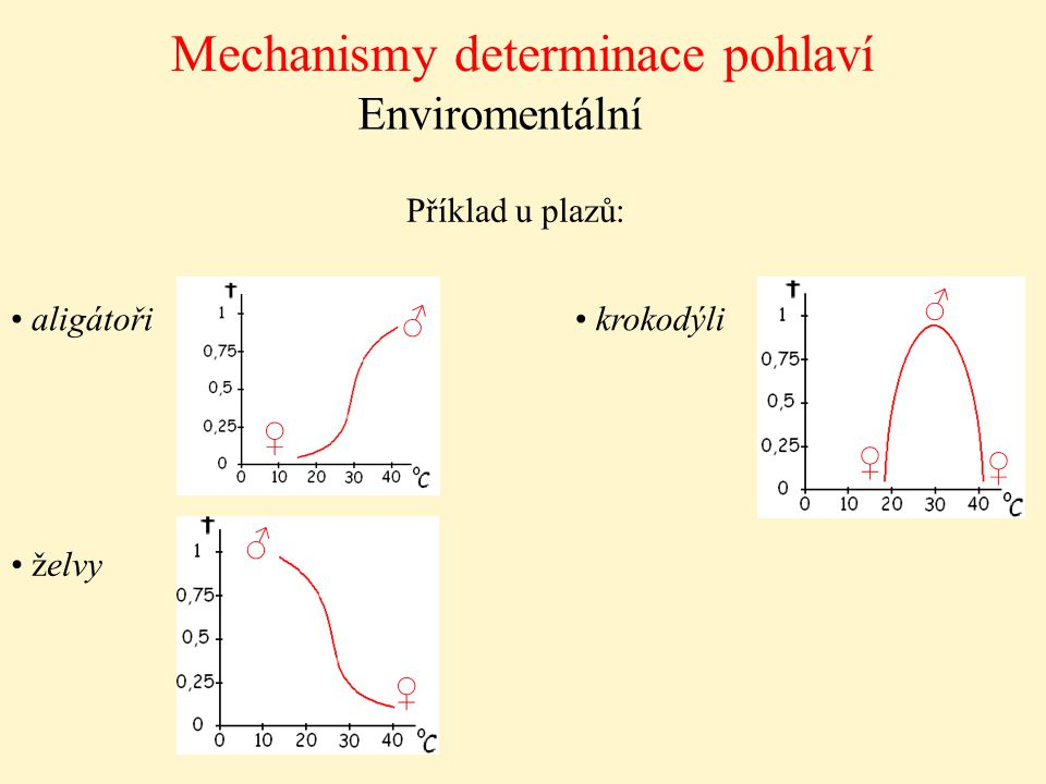 Mechanismy determinace pohlaví Enviromentální Příklad u plazů: aligátoři želvy krokodýli ♀ ♂ ♂ ♂ ♀ ♀ ♀