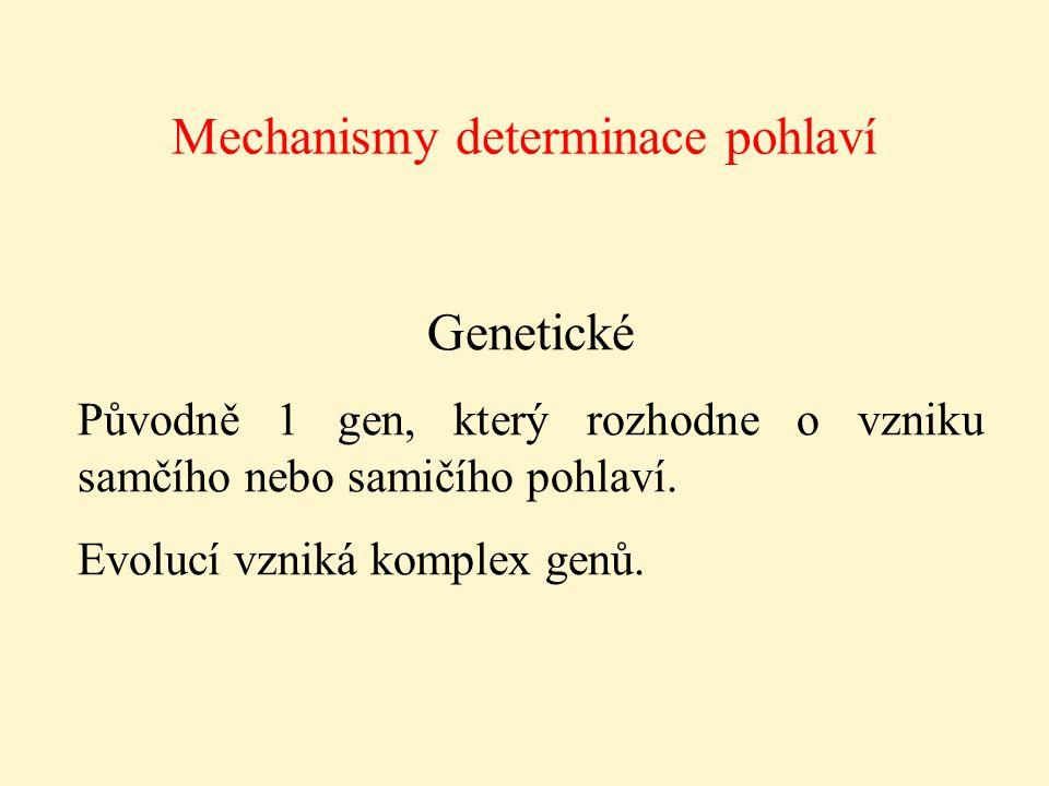 Mechanismy determinace pohlaví Genetické Původně 1 gen, který rozhodne o vzniku samčího nebo samičího pohlaví. Evolucí vzniká komplex genů.