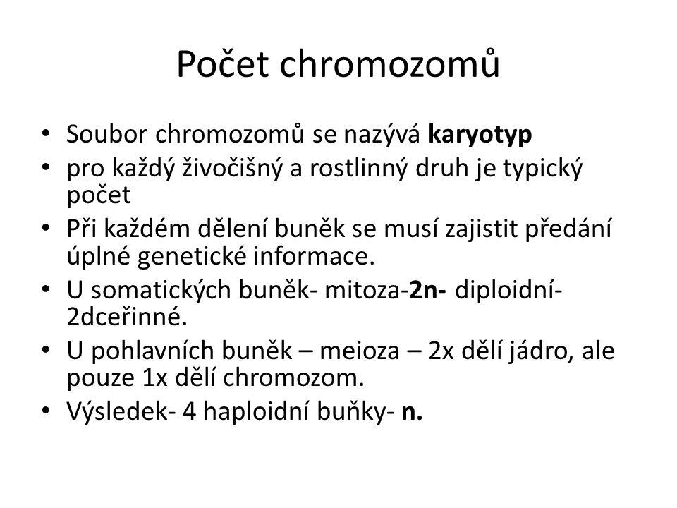 Počet chromozomů Soubor chromozomů se nazývá karyotyp pro každý živočišný a rostlinný druh je typický počet Při každém dělení buněk se musí zajistit předání úplné genetické informace.