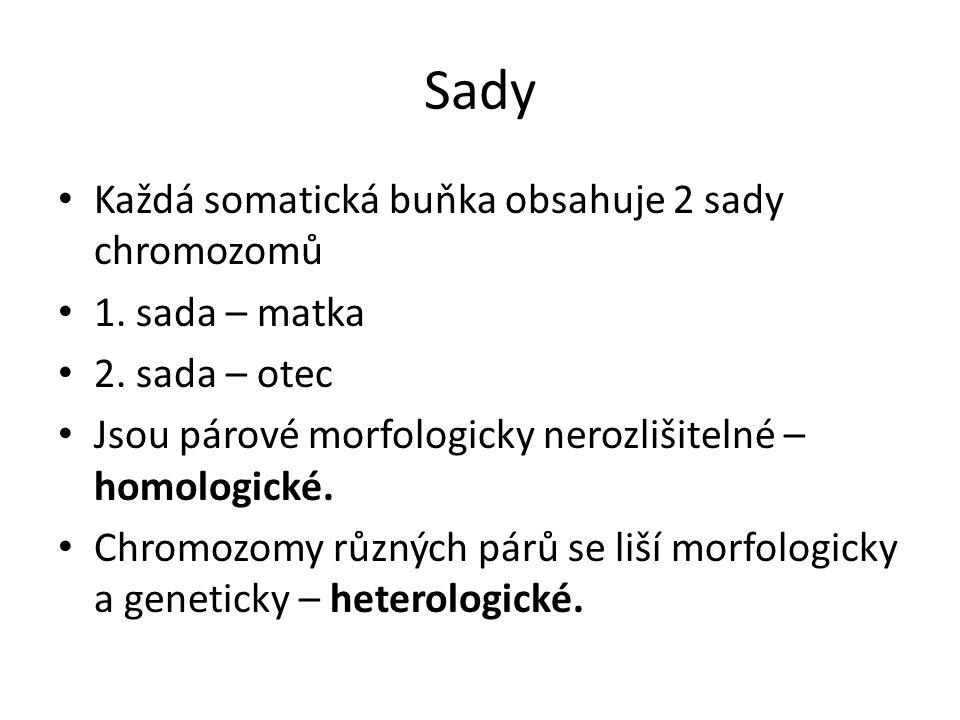 Sady Každá somatická buňka obsahuje 2 sady chromozomů 1.