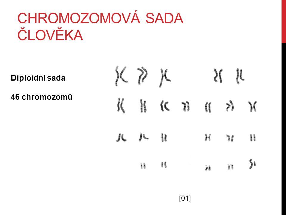 CHROMOZOMOVÁ SADA ČLOVĚKA [01] Diploidní sada 46 chromozomů