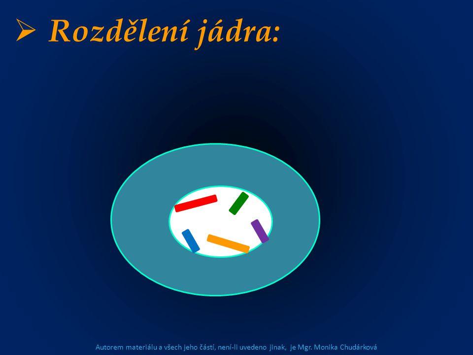 Autorem materiálu a všech jeho částí, není-li uvedeno jinak, je Mgr. Monika Chudárková  Rozdělení jádra: