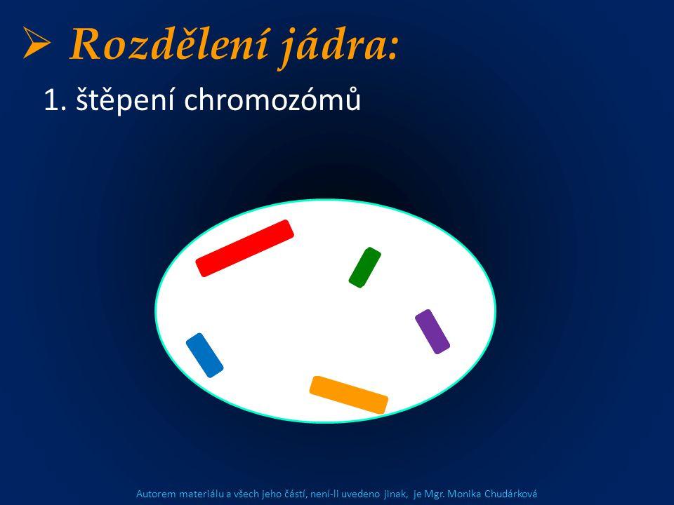 Autorem materiálu a všech jeho částí, není-li uvedeno jinak, je Mgr. Monika Chudárková  Rozdělení jádra: 1. štěpení chromozómů