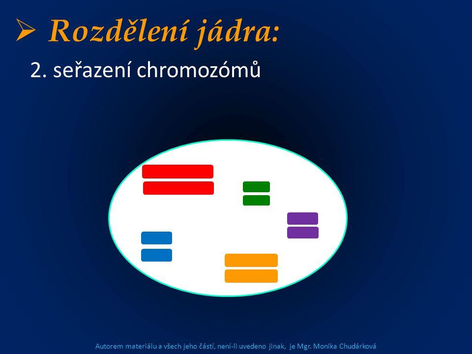 Autorem materiálu a všech jeho částí, není-li uvedeno jinak, je Mgr. Monika Chudárková  Rozdělení jádra: 2. seřazení chromozómů