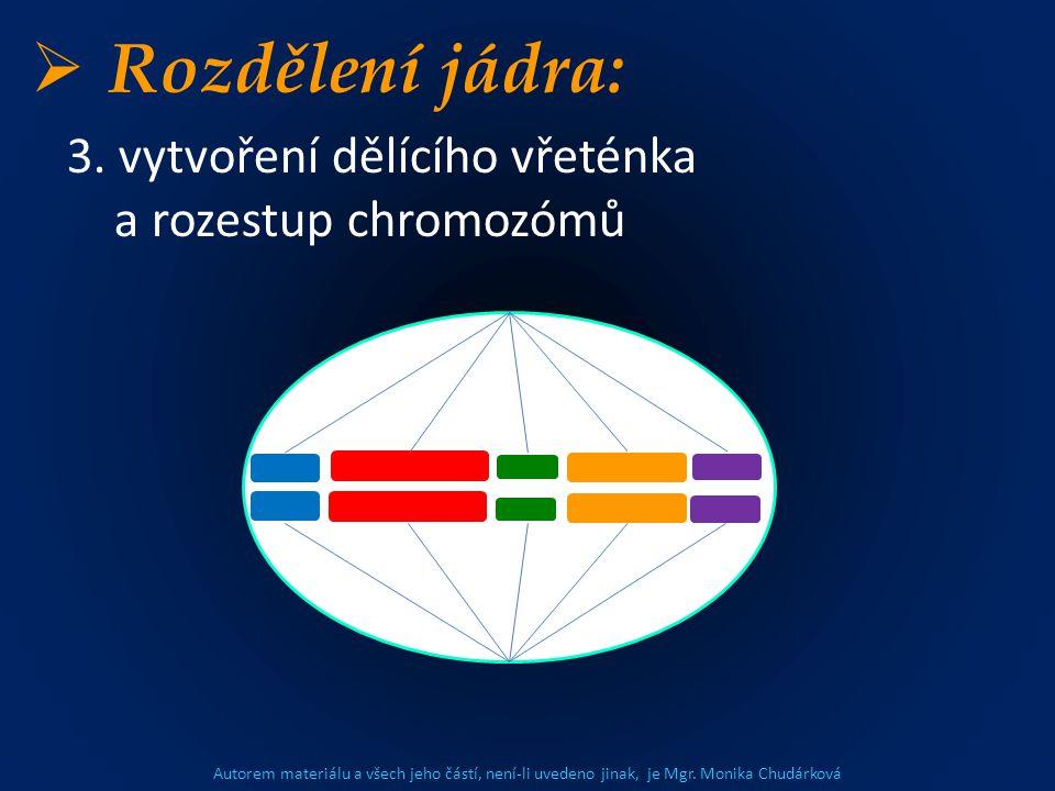 Autorem materiálu a všech jeho částí, není-li uvedeno jinak, je Mgr. Monika Chudárková  Rozdělení jádra: 3. vytvoření dělícího vřeténka a rozestup ch