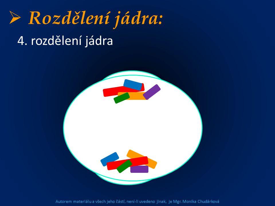 Autorem materiálu a všech jeho částí, není-li uvedeno jinak, je Mgr. Monika Chudárková  Rozdělení jádra: 4. rozdělení jádra