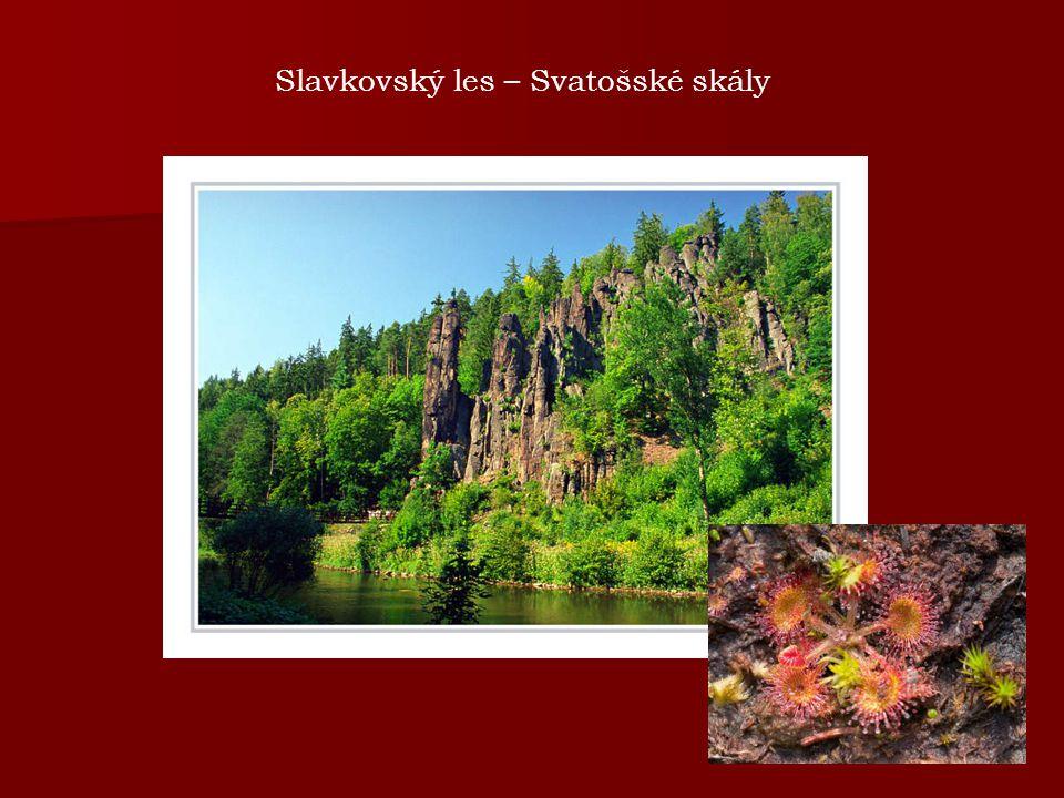 Slavkovský les – Svatošské skály