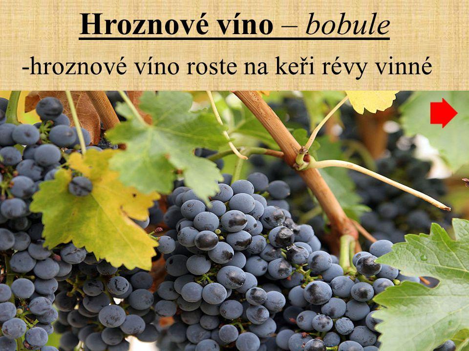 Hroznové víno – bobule -hroznové víno roste na keři révy vinné