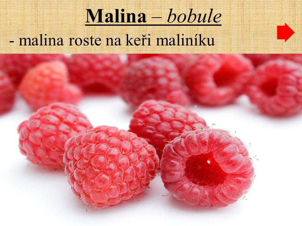 Malina – bobule - malina roste na keři maliníku