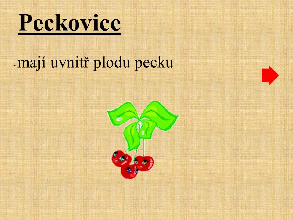 Peckovice - mají uvnitř plodu pecku