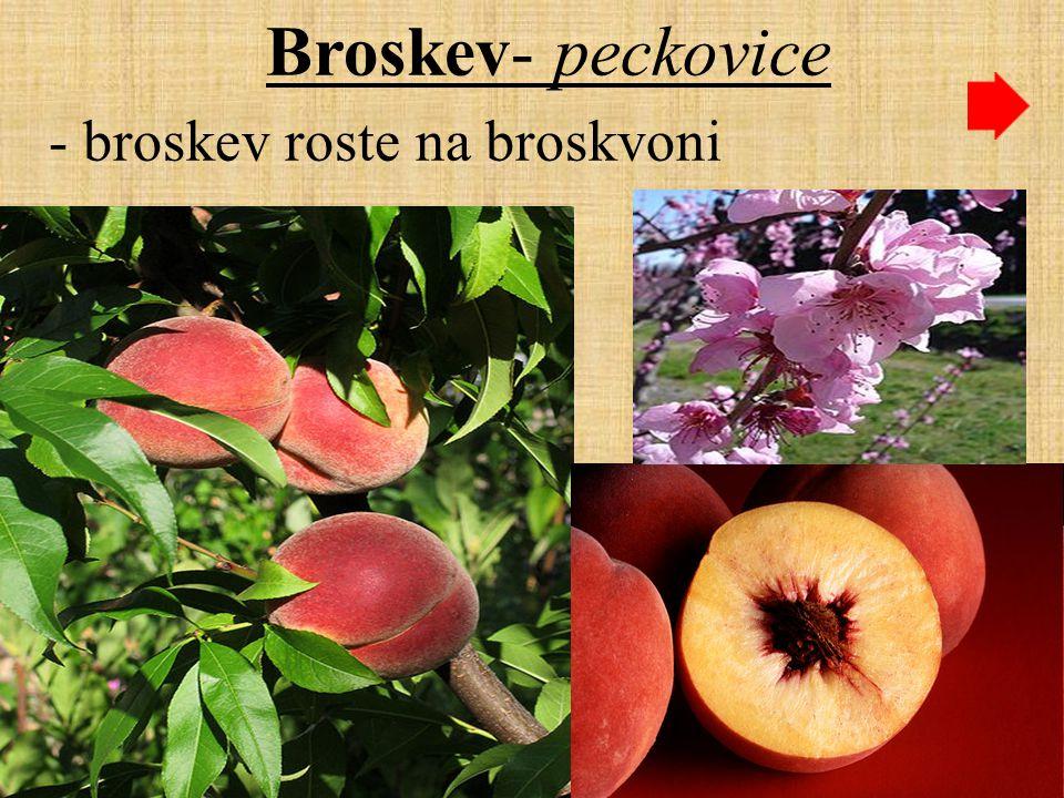 Zdroje: úvod- banán, okurka- http://www.gify.nou.cz/r_ovoce.htm šipky- http://www.gify.nou.cz/pc_tlacitka.htm malvice-hruška- http://www.gify.nou.cz/r_ovoce.htm jablko- http://cs.wikipedia.org/wiki/Malvice, http://cs.wikipedia.org/wiki/Jablko jabloň-květ- http://cs.wikipedia.org/wiki/Jablo%C5%88 hruška- http://cs.wikipedia.org/wiki/Hru%C5%A1ka hrušeň- květ-http://cs.wikipedia.org/wiki/Hru%C5%A1e%C5%88 peckovice-třešně- http://www.gify.nou.cz/r_ovoce.htm třešně- http://cs.wikipedia.org/wiki/T%C5%99e%C5%A1n%C4%9B třešeň- květ- http://cs.wikipedia.org/wiki/T%C5%99e%C5%A1e%C5%88 meruňka- http://cs.wikipedia.org/wiki/Meru%C5%88ka meruňka-květ- http://cs.wikipedia.org/wiki/Meru%C5%88ka broskev- http://cs.wikipedia.org/wiki/Broskev broskvoň-květ- http://cs.wikipedia.org/wiki/Broskev švestka- http://cs.wikipedia.org/wiki/%C5%A0vestka_dom%C3%A1c%C3%AD bobule- jahoda- http://www.gify.nou.cz/r_ovoce.htm jahodník- http://cs.wikipedia.org/wiki/Jahodn%C3%ADk jahoda- http://cs.wikipedia.org/wiki/Jahoda rybíz- http://cs.wikipedia.org/wiki/%C4%8Cerven%C3%BD_ryb%C3%ADz angrešt - http://cs.wikipedia.org/wiki/Angre%C5%A1t hroznové víno- http://cs.wikipedia.org/wiki/Hroznov%C3%A9_v%C3%ADno malina- http://cs.wikipedia.org/wiki/Malina ostružina-http://cs.wikipedia.org/wiki/Ostru%C5%Beina borůvka- http://cs.wikipedia.org/wiki/Soubor:Bilberries.jpg konec-jahody - http://www.gify.nou.cz/r_ovoce.htm http://www.gify.nou.cz/r_ovoce.htmhttp://www.gify.nou.cz/pc_tlacitka.htmhttp://www.gify.nou.cz/r_ovoce.htmhttp://cs.wikipedia.org/wiki/Malvicehttp://cs.wikipedia.org/wiki/Jablkohttp://cs.wikipedia.org/wiki/Jablo%C5%88http://cs.wikipedia.org/wiki/Hru%C5%A1kahttp://www.gify.nou.cz/r_ovoce.htmhttp://cs.wikipedia.org/wiki/T%C5%99e%C5%A1n%C4%9Bhttp://cs.wikipedia.org/wiki/T%C5%99e%C5%A1e%C5%88http://cs.wikipedia.org/wiki/Meru%C5%88ka http://cs.wikipedia.org/wiki/Broskev http://cs.wikipedia.org/wiki/%C5%A0vestka_dom%C3%A1c%C3%ADhttp://www.gify.nou.cz/r_ovoce.htmhttp://cs.wikipedia.org/wiki/Jahodn%C3%ADk