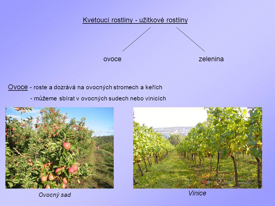 Kvetoucí rostliny - užitkové rostliny ovocezelenina Ovoce - roste a dozrává na ovocných stromech a keřích - můžeme sbírat v ovocných sudech nebo vinic