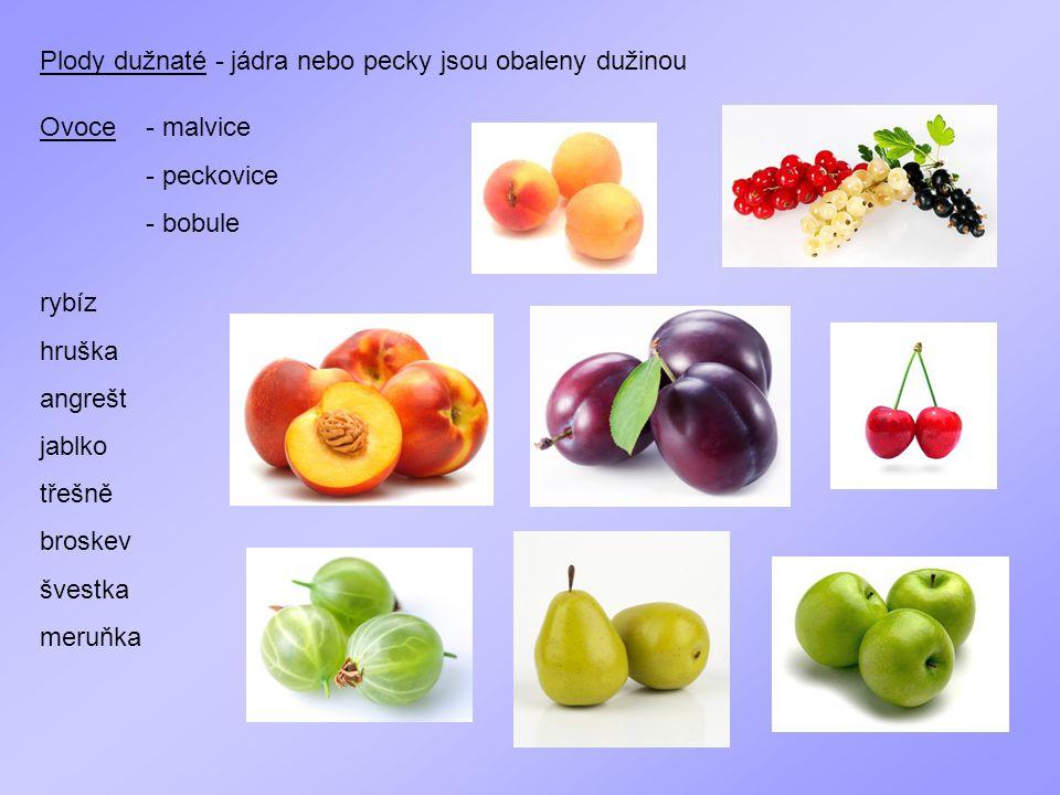 Ovoce - malvice - peckovice - bobule Plody dužnaté - jádra nebo pecky jsou obaleny dužinou rybíz hruška angrešt jablko třešně broskev švestka meruňka