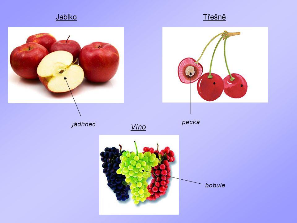 Jablko jádřinec Třešně pecka Víno bobule