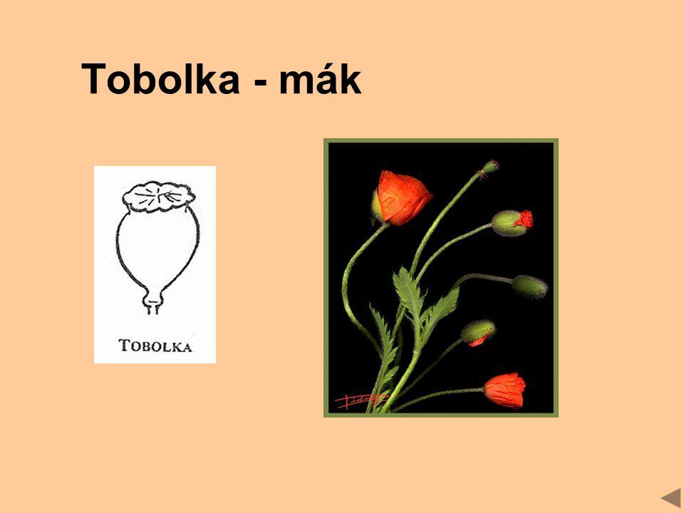 Tobolka - mák
