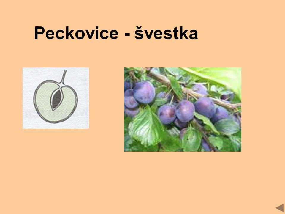 Peckovice - švestka