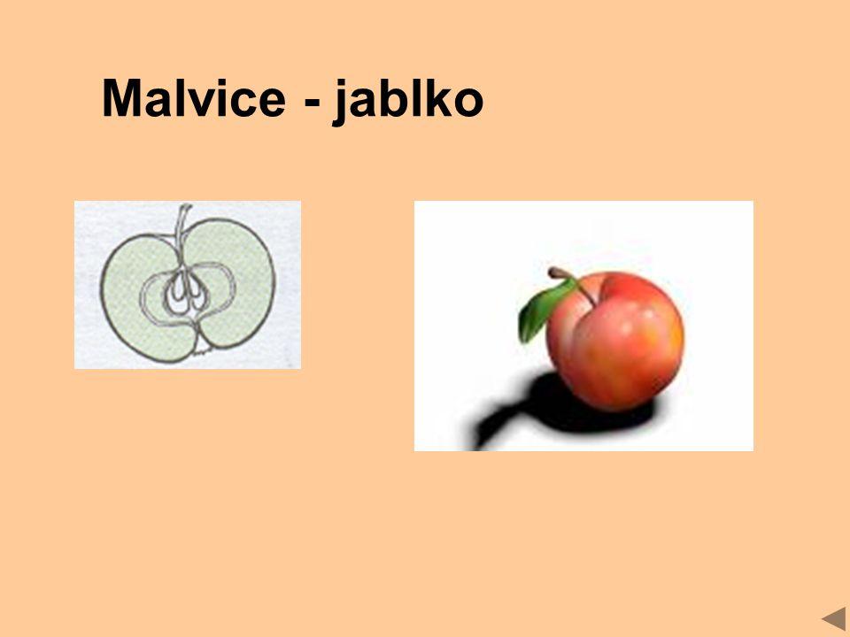 Malvice - jablko