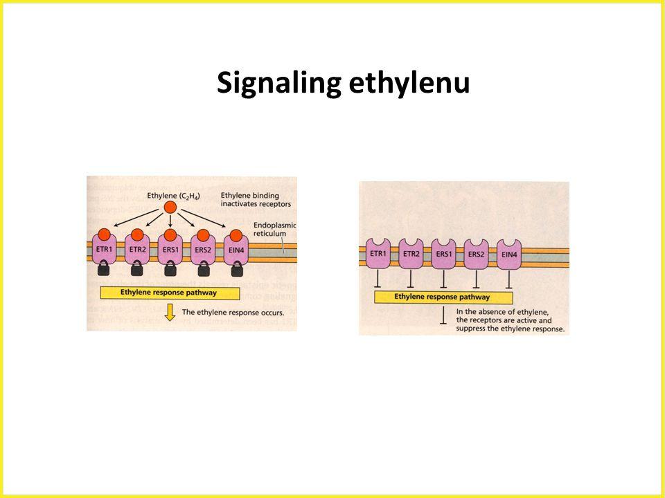 Signaling ethylenu