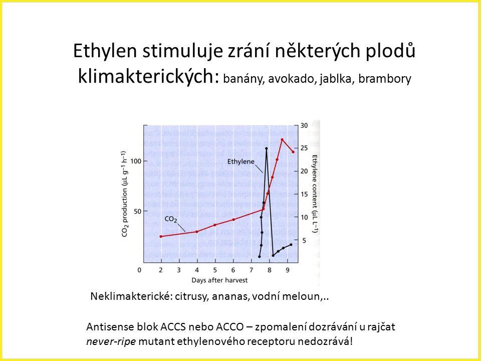Ethylen stimuluje zrání některých plodů klimakterických: banány, avokado, jablka, brambory Neklimakterické: citrusy, ananas, vodní meloun,.. Antisense
