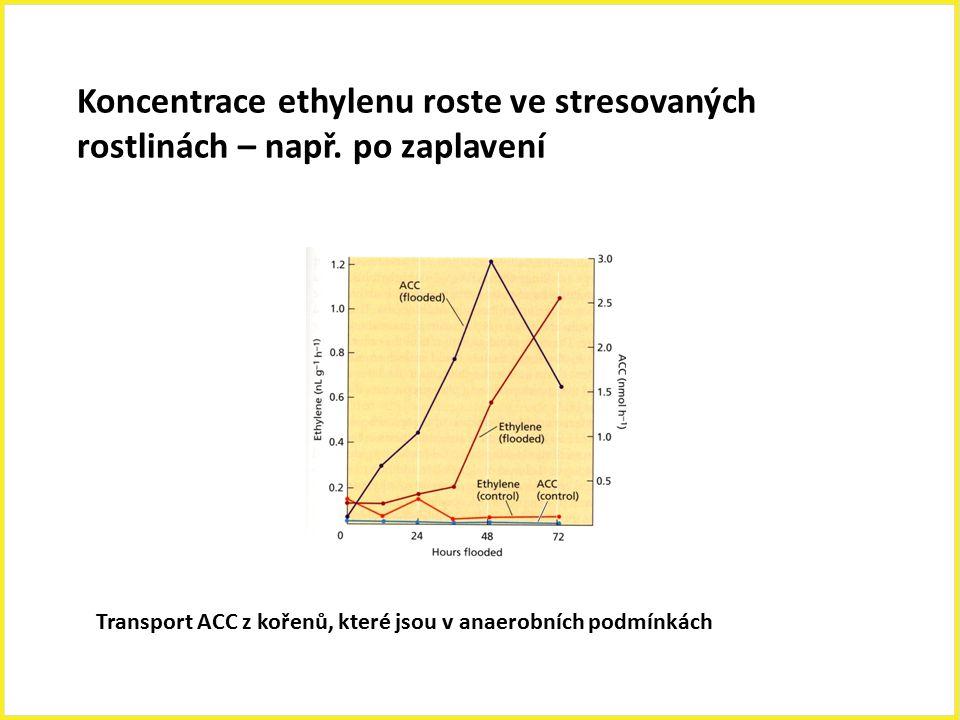 Koncentrace ethylenu roste ve stresovaných rostlinách – např. po zaplavení Transport ACC z kořenů, které jsou v anaerobních podmínkách