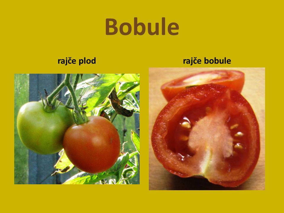 Bobule rajče plodrajče bobule