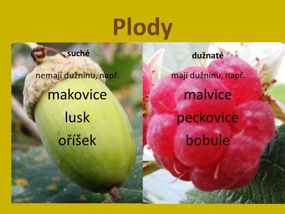 Plody suché nemají dužninu, např.makovice lusk oříšek dužnaté mají dužninu, např.
