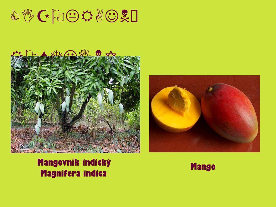 CIZOKRAJNÉ ROSTLINY Mangovník indický Magnifera indica Mango