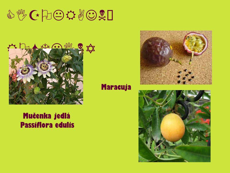 CIZOKRAJNÉ ROSTLINY Mučenka jedlá Passiflora edulis Maracuja
