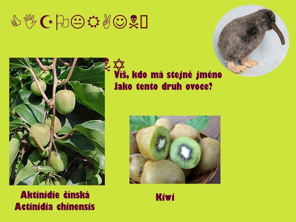 CIZOKRAJNÉ ROSTLINY Aktinidie čínská Actinidia chinensis Kiwi Víš, kdo má stejné jméno Jako tento druh ovoce?