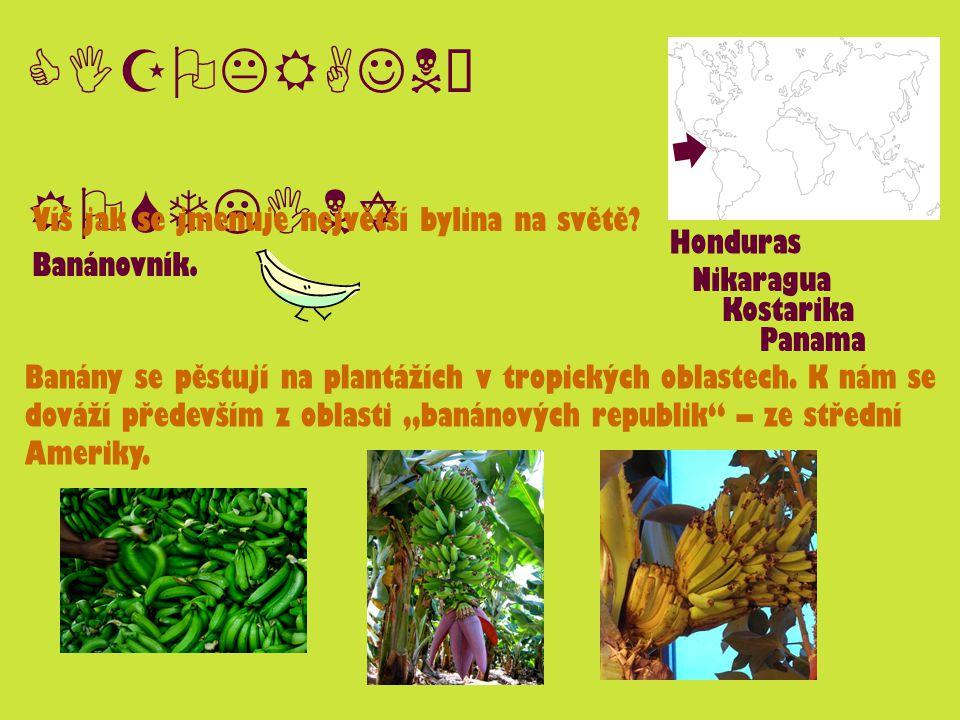 CIZOKRAJNÉ ROSTLINY Víš jak se jmenuje největší bylina na světě? Banánovník. Banány se pěstují na plantážích v tropických oblastech. K nám se dováží p