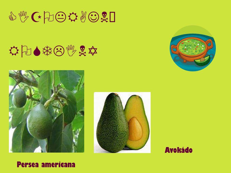 ZÁPIS Cizokrajné rostliny druhy ovoce: - datle (palma datlová) - kokos (kokosovník ořechoplodý) - banán (banánovník) - fík - citrusy - ananas - kiwi - mango - granátové jablko