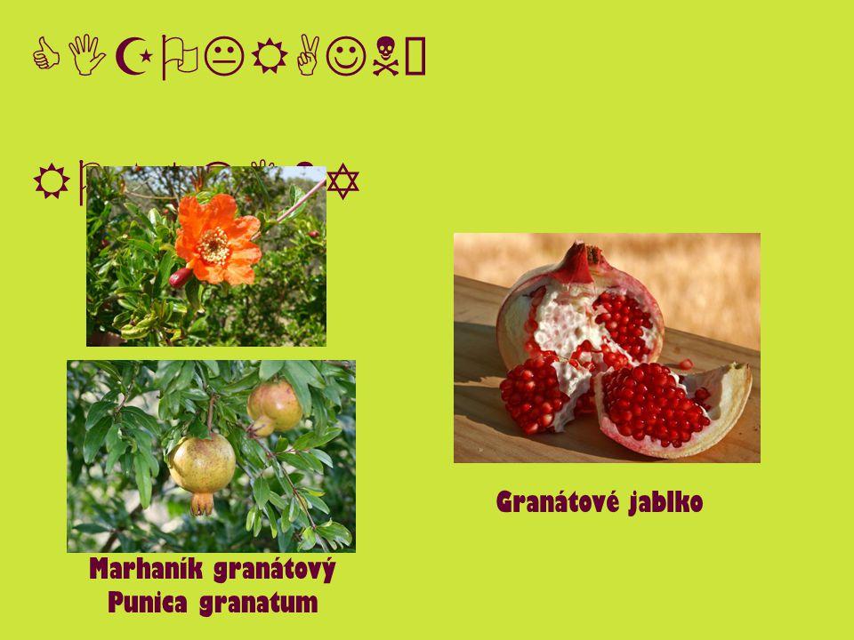 CIZOKRAJNÉ ROSTLINY Marhaník granátový Punica granatum Granátové jablko