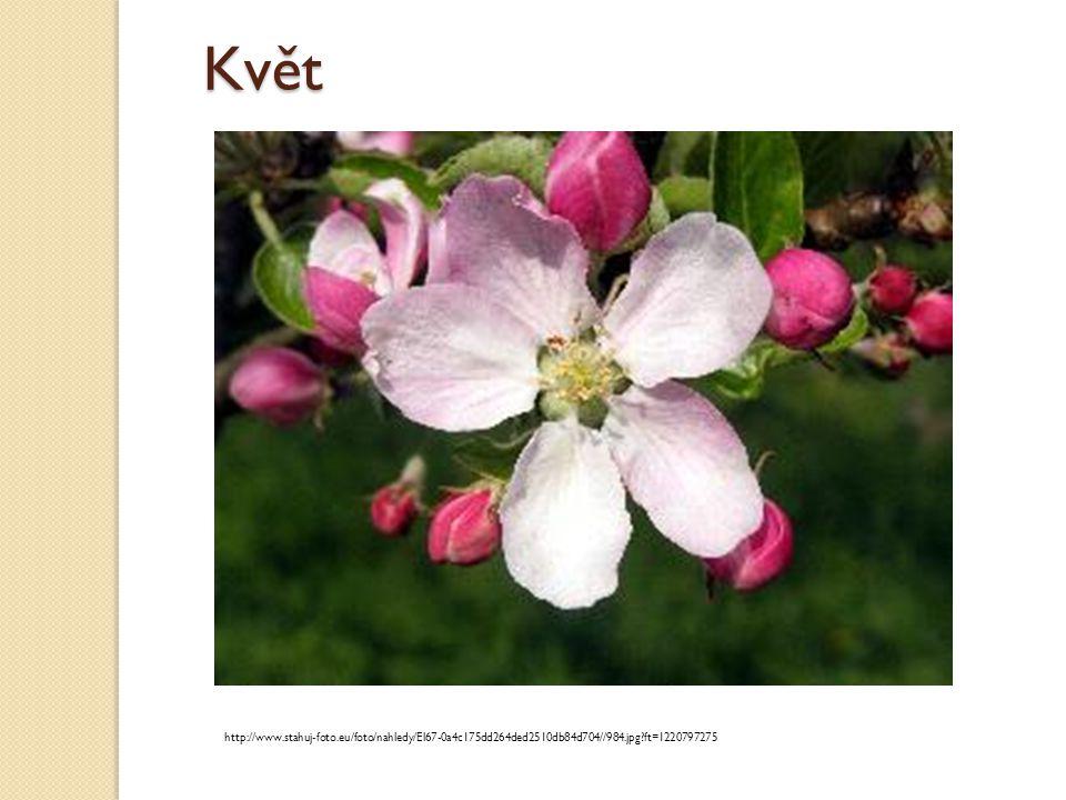 Květ http://www.stahuj-foto.eu/foto/nahledy/El67-0a4c175dd264ded2510db84d704//984.jpg?ft=1220797275