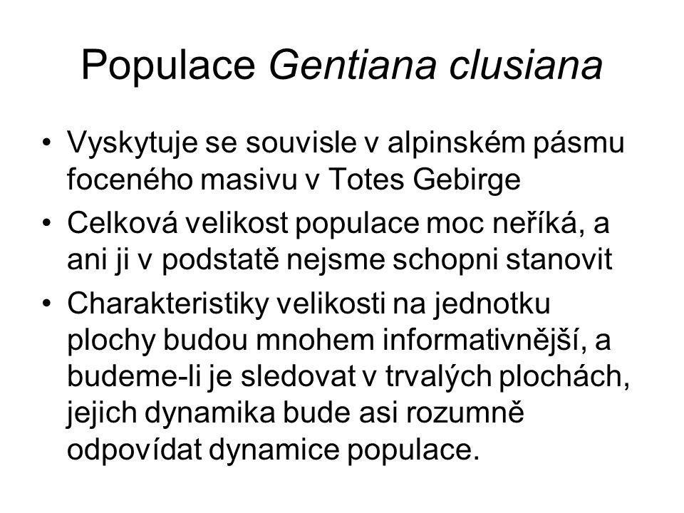 Populace Gentiana clusiana Vyskytuje se souvisle v alpinském pásmu foceného masivu v Totes Gebirge Celková velikost populace moc neříká, a ani ji v podstatě nejsme schopni stanovit Charakteristiky velikosti na jednotku plochy budou mnohem informativnější, a budeme-li je sledovat v trvalých plochách, jejich dynamika bude asi rozumně odpovídat dynamice populace.