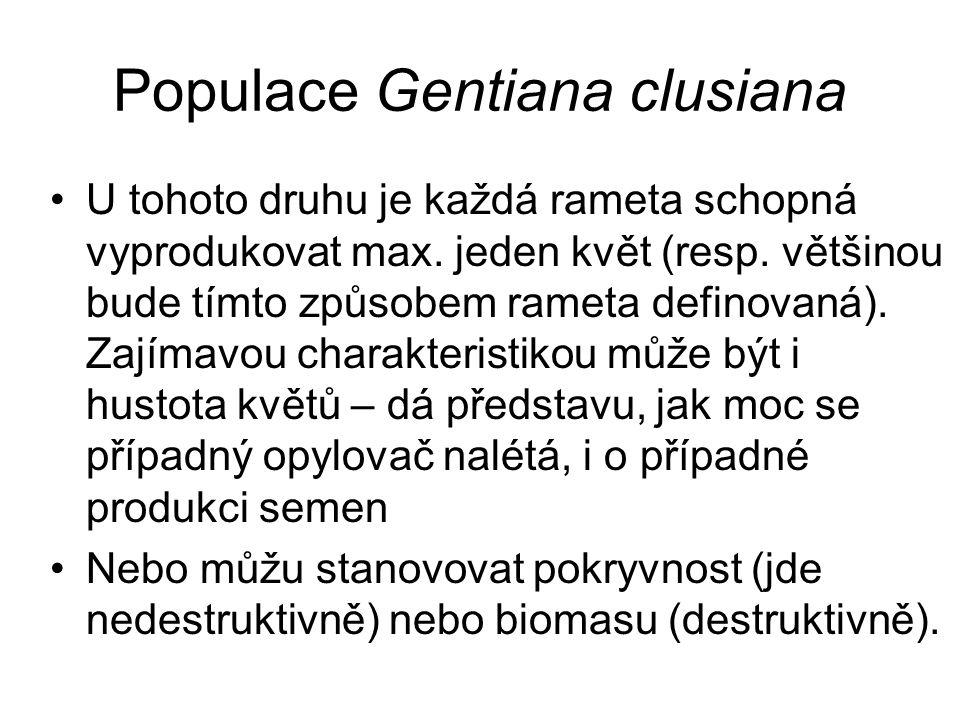 Populace Gentiana clusiana U tohoto druhu je každá rameta schopná vyprodukovat max.