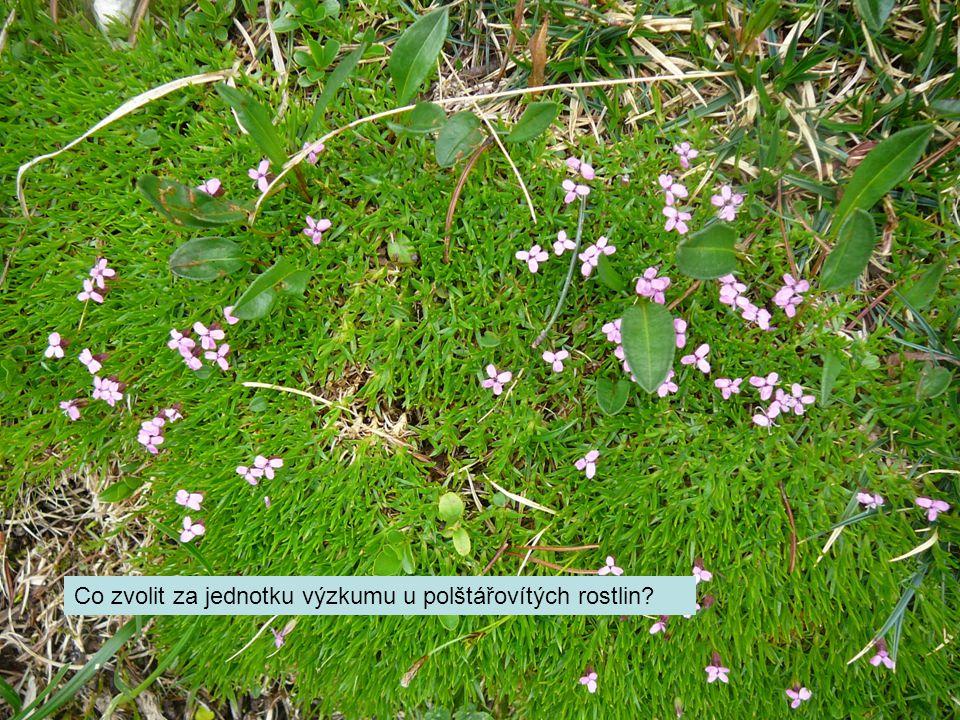 Co zvolit za jednotku výzkumu u polštářovítých rostlin?