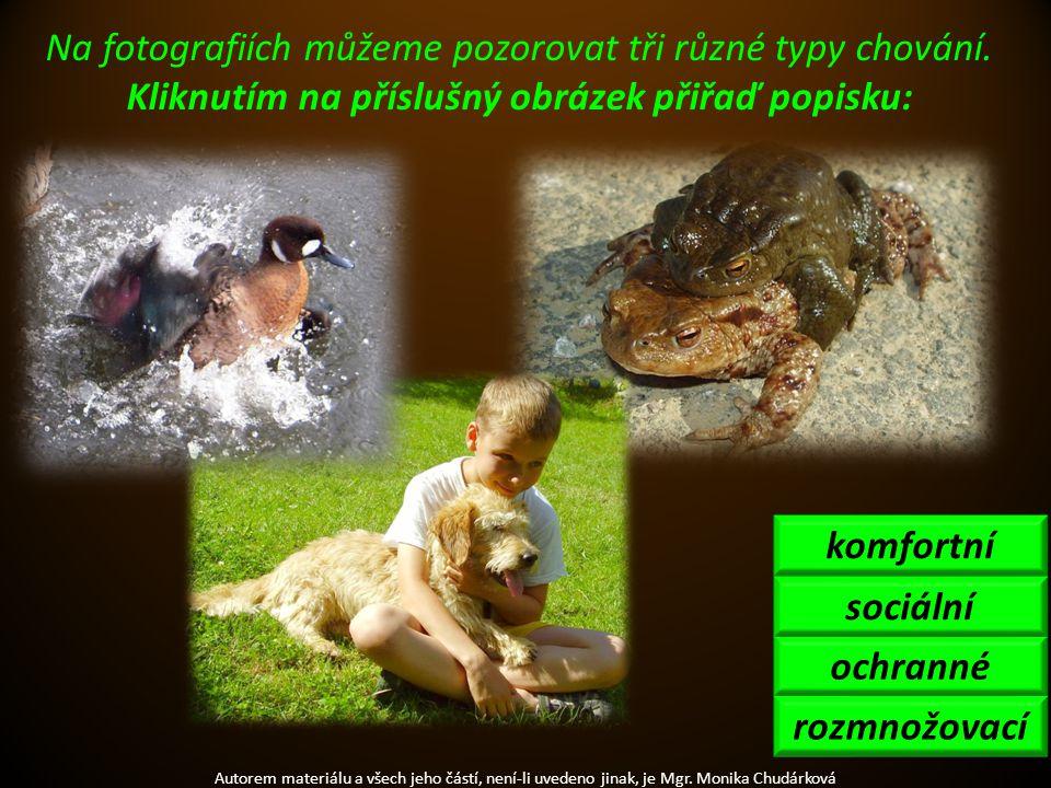 Autorem materiálu a všech jeho částí, není-li uvedeno jinak, je Mgr. Monika Chudárková Na fotografiích můžeme pozorovat tři různé typy chování. Kliknu