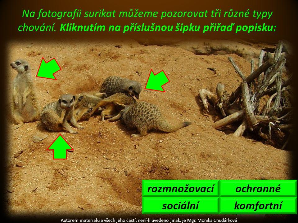 Autorem materiálu a všech jeho částí, není-li uvedeno jinak, je Mgr. Monika Chudárková Na fotografii surikat můžeme pozorovat tři různé typy chování.