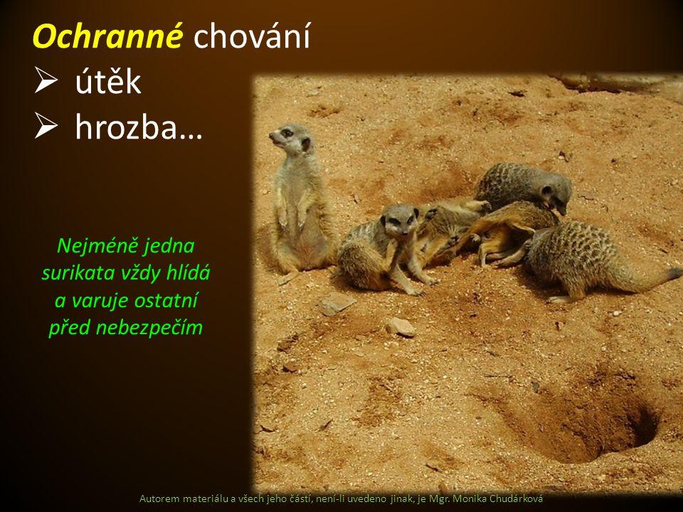 Autorem materiálu a všech jeho částí, není-li uvedeno jinak, je Mgr. Monika Chudárková Ochranné chování  útěk  hrozba… Nejméně jedna surikata vždy h