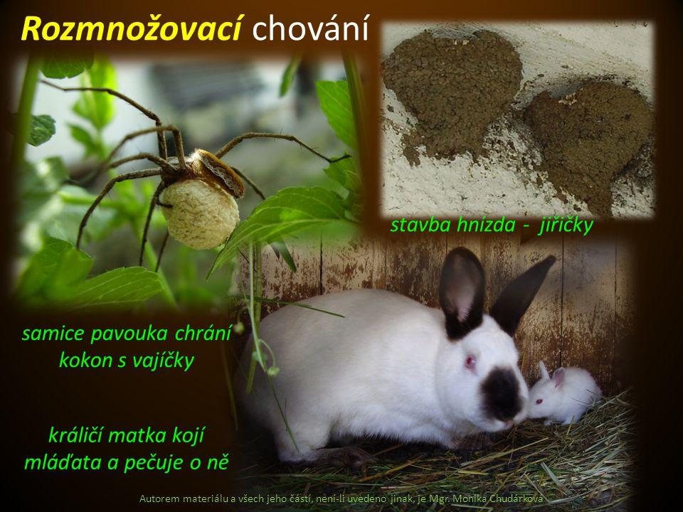 Autorem materiálu a všech jeho částí, není-li uvedeno jinak, je Mgr. Monika Chudárková Rozmnožovací chování samice pavouka chrání kokon s vajíčky stav